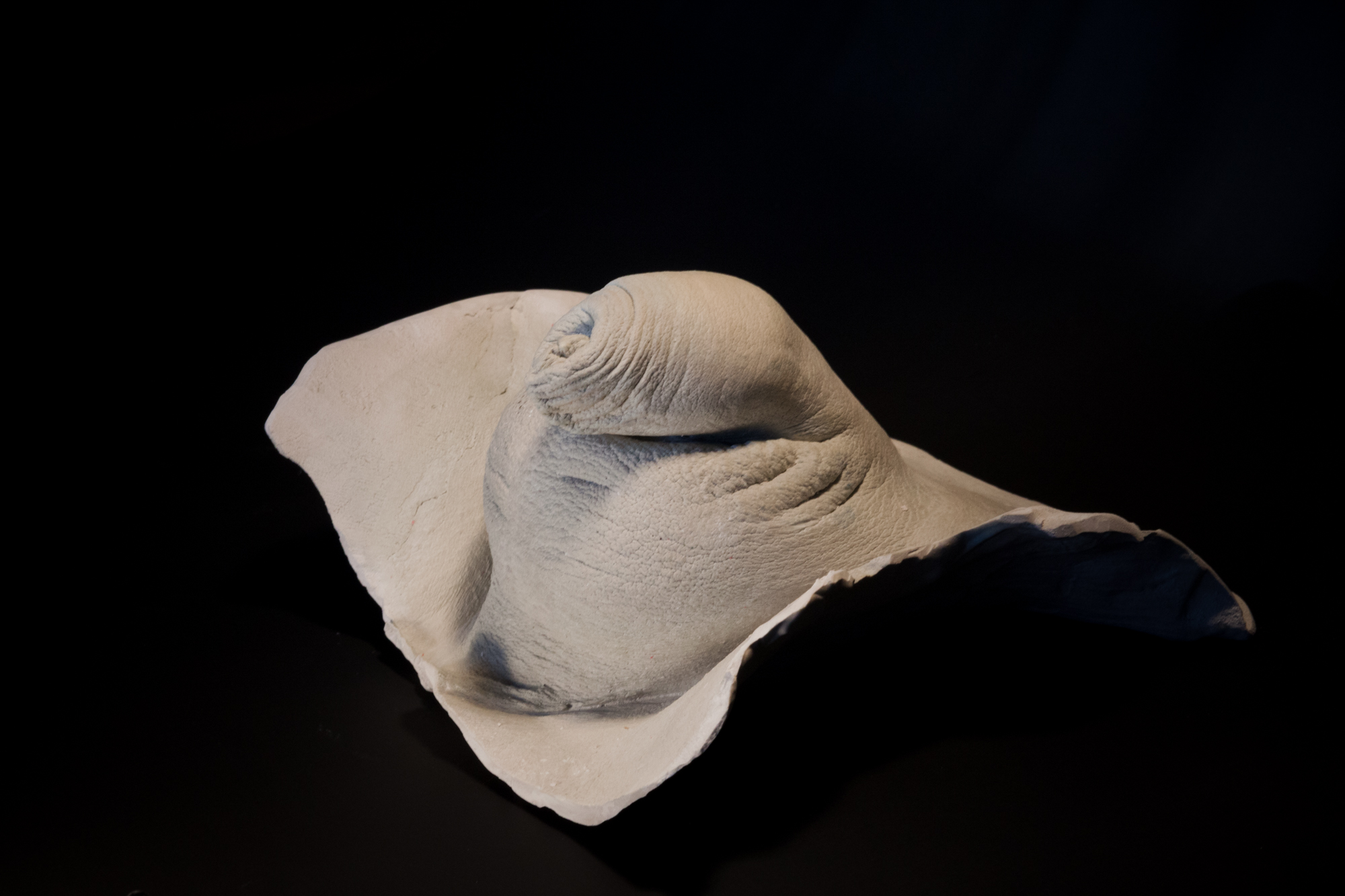 Pénis au repos en plâtre- Modèle 4